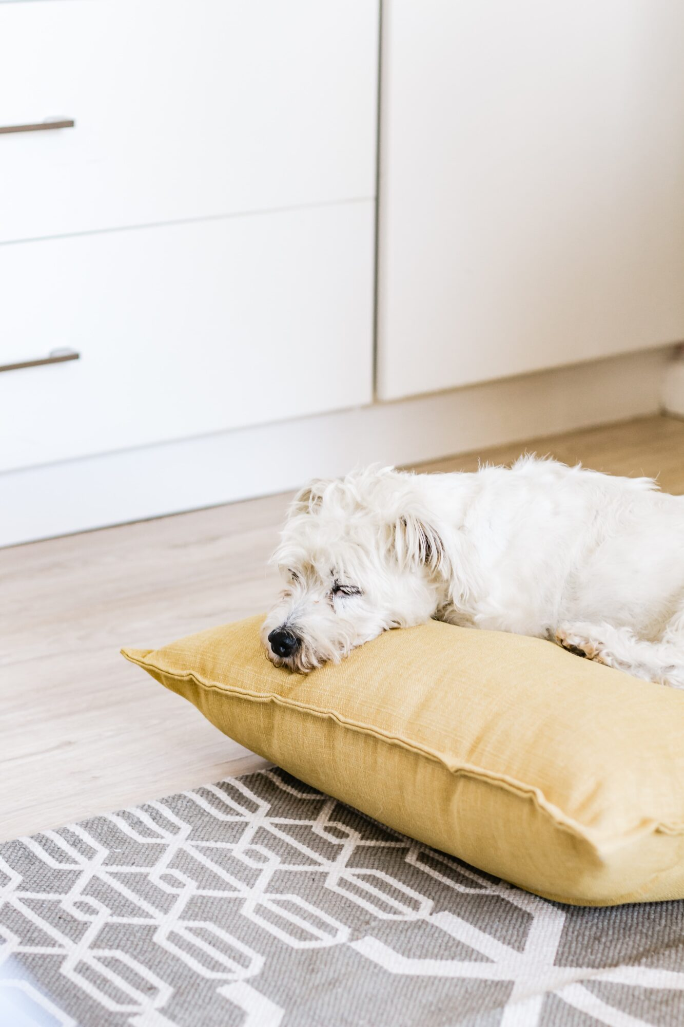 Hundepuder – giv din hund den bedste komfort